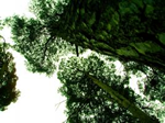 Main Images - Greenbark.png (150px x 112px)